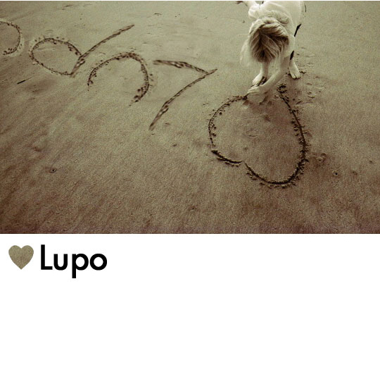 Love Lupo